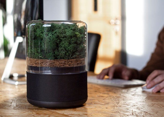 Naturally Powered Air Purifiers Are Here