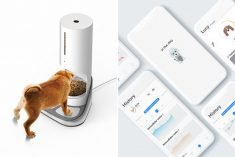 The Conceptual 'In The Dog' Pet Feeder Tracks a Dog's Body Composition