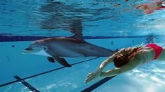 Edge Innovations' Realistic Dolphin May Replace Cetaceans in Captivity
