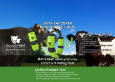 Moocall Sends You a Text When Your Cow Enters a Standing Heat