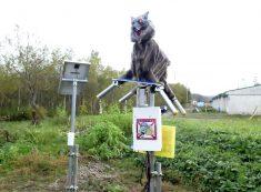 Hokkaido town deploys 'Monster Wolf' robots to deter wild bears