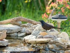 The 'Terra' Bird Watching Device Listens for Nearby Wildlife
