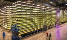 Aerofarms Teams Up With Nokia Bell Labs to Develop New Ag Tech